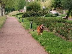 DANA: Balade du matin / Morning walk [ON EXPLORE]
