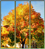 Wallpaper Autumn.  ©UdoSm