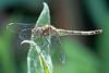 EOS 6D Peter Harriman 12 20 51 39315 dragonfly dpp