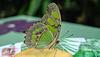 HUNAWIHR: Jardins des papillons 16