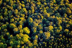 Fuzzy Forest