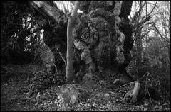 Woods near Deepdene.