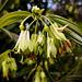 Alstroemeriaceae .? Bonne fête de l'ascension