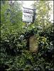 verdant country bus stop