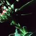 Jade Flower (2)