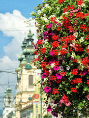 Flowers beautify the city.