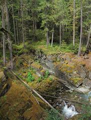 Rocks and plants of Ohanapecosh River.