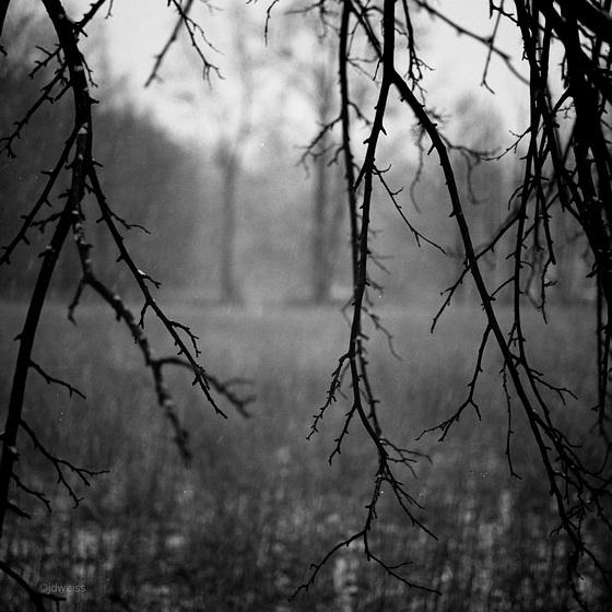 the veiled meadow
