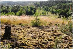 Sand-Moss-Grass-Heath......our moorhills