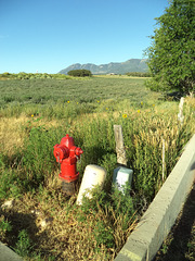Red hydrant in the middle of nowhere