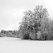 Winter in Oberschwaben in black and white