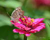 Butterfly ⁀⋱‿✿
