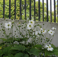 HAPPY FENCE FRIDAY!!!!!!!!!!!!!!!!!!!!!!!!!!!!!!!