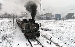 Snowy Catici