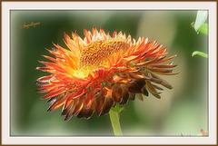 Si votre pensée est une rose, vous êtes un jardin de rose; si c'est une épine, vous êtes un carburant pour un fourneau.