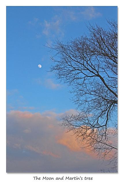 The Moon and Martin's tree - East Blatchington - 20.3.2016