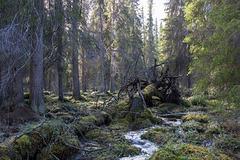 Pyhäjoki nature trail