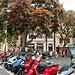 """Funchal (04) - Am """"Praça do Município"""" (02)"""