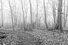 Brouillard dans le boisé/Fog in the wood