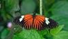 HUNAWIHR: Jardins des papillons 23