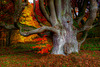 Pareidolia: scared tree