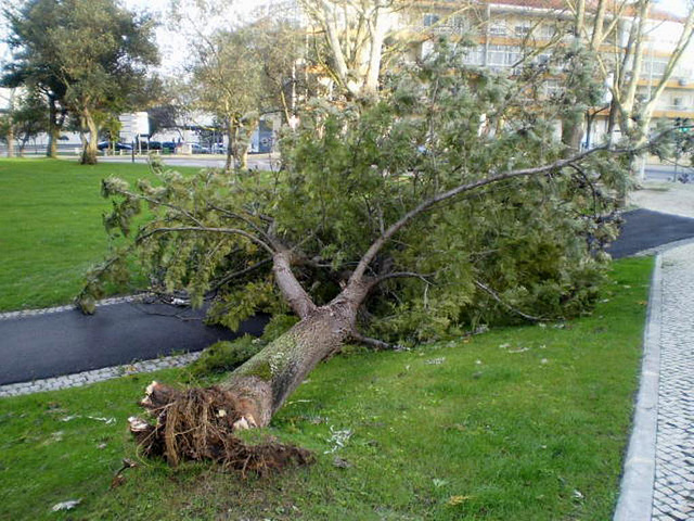 Aftermath of a windstorm.