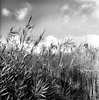 The fields the sky