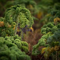 Végétation marsienne