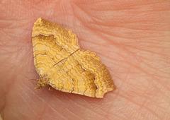 Moth IMG 6636