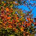 Autumn Colours in Manor Park