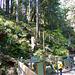 Lynn Canyon, BC