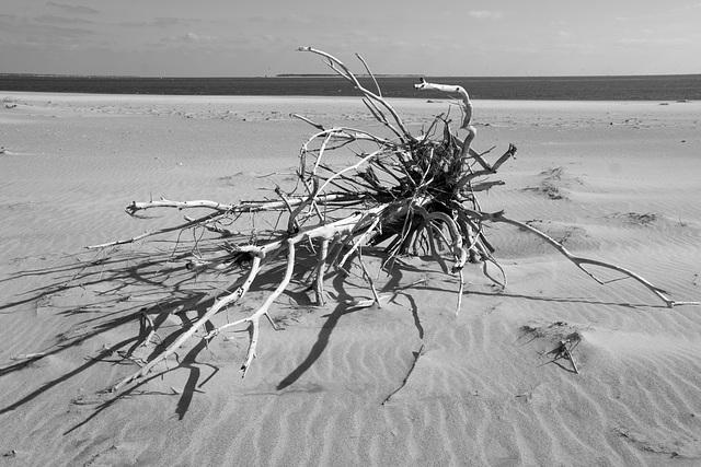 Driftwood, Fort Macon beach