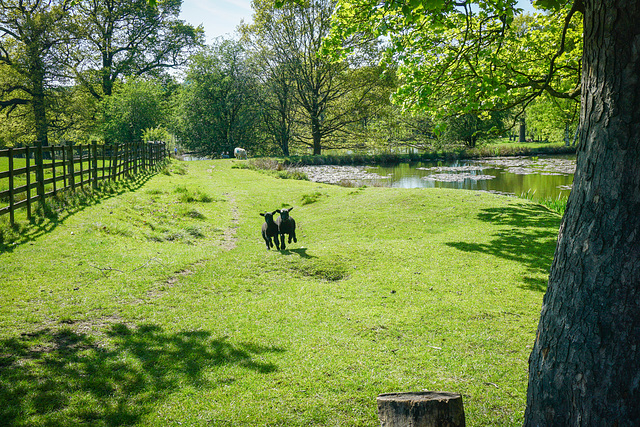 A ''Happy Fence Friday'' to everyone - from Dj.. Hardwick hall lakes.