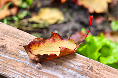 1 (24)...austria ..autumn