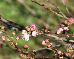 Blooming beauties  ...