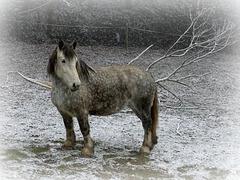 Même pas assez de neige pour se rouler dedans... Pfff.. [ON EXPLORE]