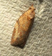Moth IMG 6847