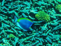 Korallenfriedhof