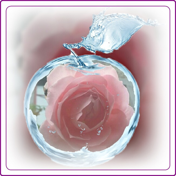 Rose de Novembre avec ephoto