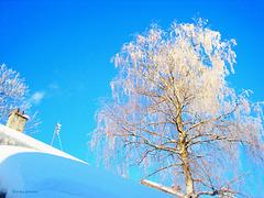 Winter azure
