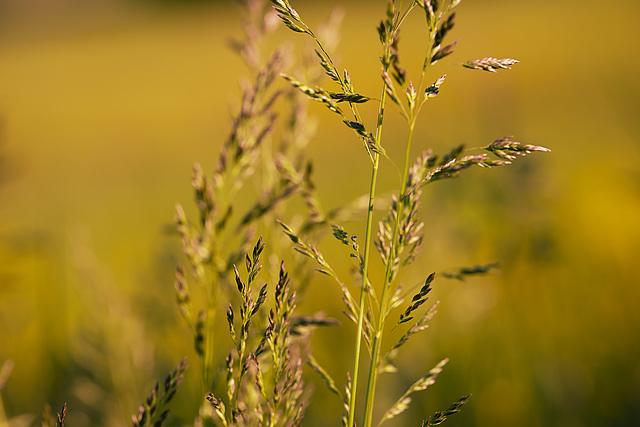 mehr Gras
