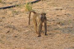 Paviano. Ngoma, landlimo inter Namibio kaj Bocvano