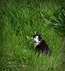 Straycat