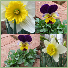 Blooming --