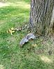 A praying squirrel