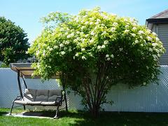Mon arbre préféré….