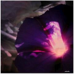 ...glowing beauty...