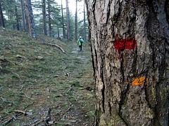 Trail Blazing in Corsica