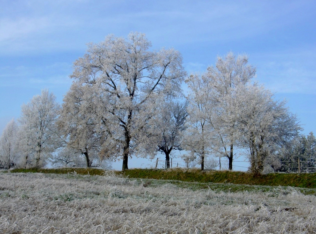 Givre / Frost