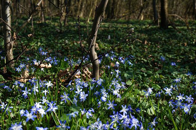 Ein Lichtblick im Wald - A bright spot in the forest